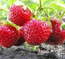 Janginizacja - co to takiego? Jak zrobić słodkie dżemy bez cukru?