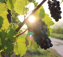 Winogrona marynowane - oryginalny przepis