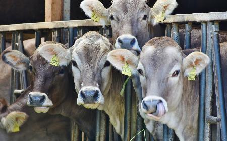 Mlekomaty - gdzie w Warszawie można kupić świeże mleko od rolnika?